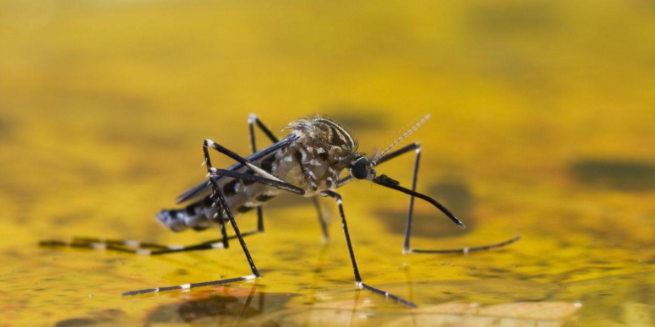 Alcune informazioni sulla febbre gialla