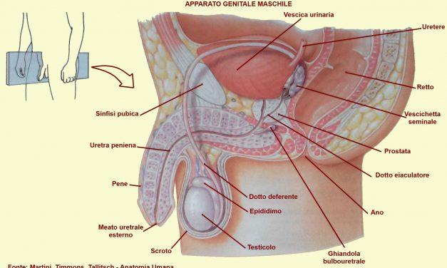 2 sindromi legate alle gonadi