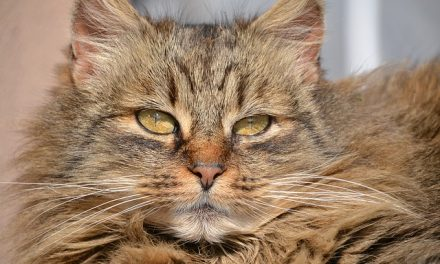 Allergia al pelo del gatto: disturbi e rimedi