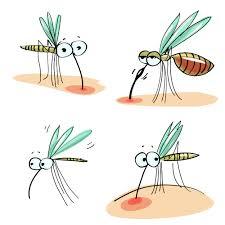 I rimedi contro le punture di zanzara